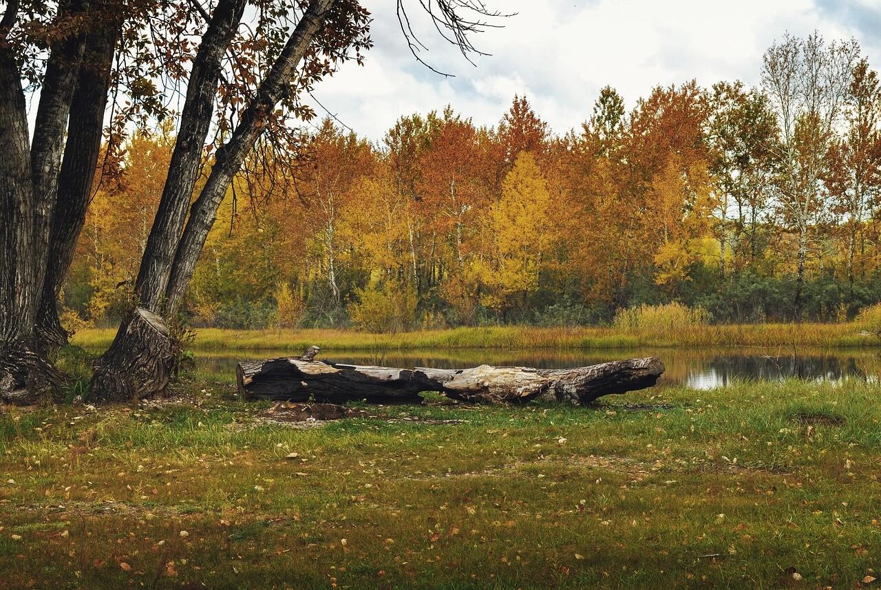 Must-See Places in Cedar Springs, Michigan
