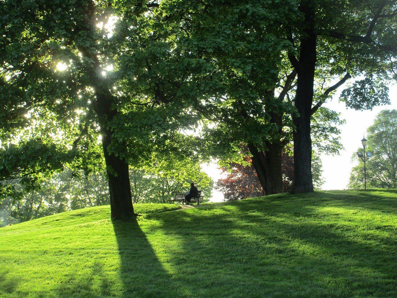 Best Public Parks in Cedar Springs